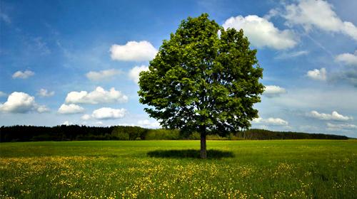 Risultati immagini per pianta un albero