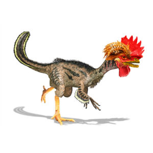 dinosauro-gallo